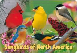 Impact Photographics Kids Puzzle Songbirds